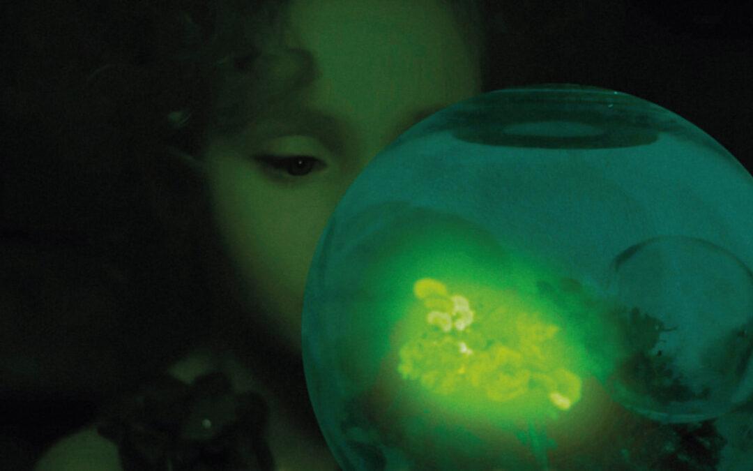 Biomimétismes. Parution du n°73 de la revue Techniques & Culture