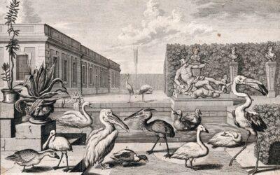 AAC Animaux et plantes de l'ailleurs (XVIe-XXIe siècle),  journée d'étude, 7 juin 2021