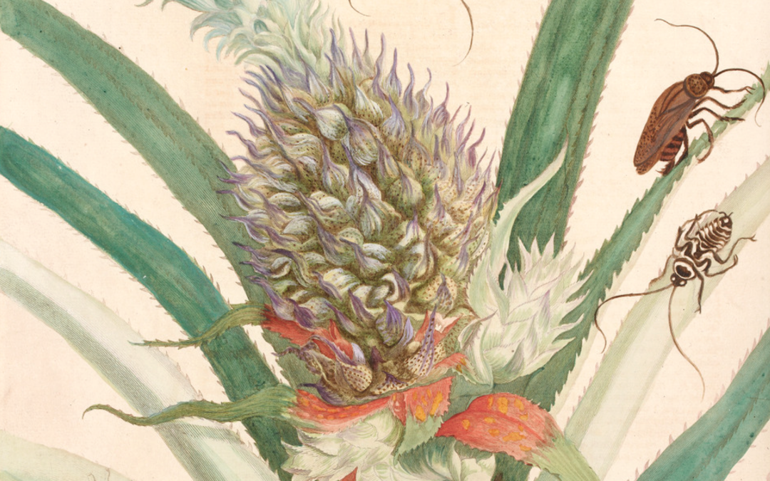 Animaux et plantes de l'ailleurs (XVIe-XXIe siècle). Journée d'étude, Avignon, 7 juin 2021